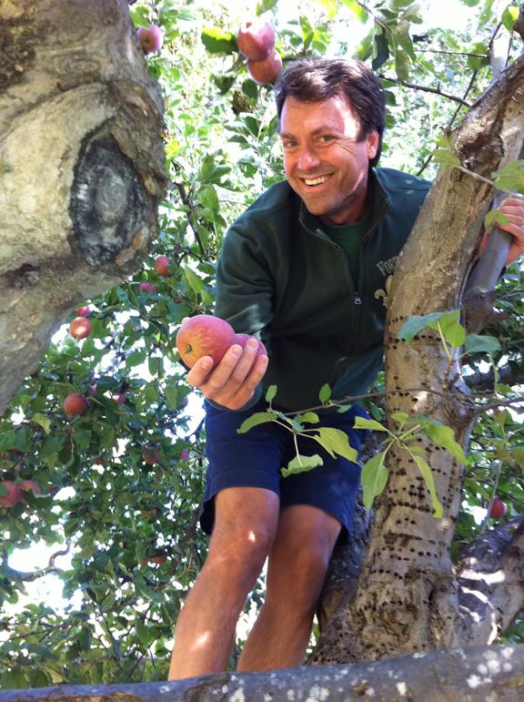 Gleaningapples