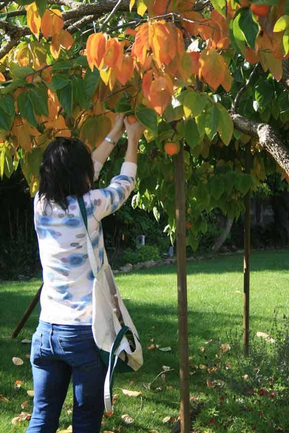 Vetransnicfruit
