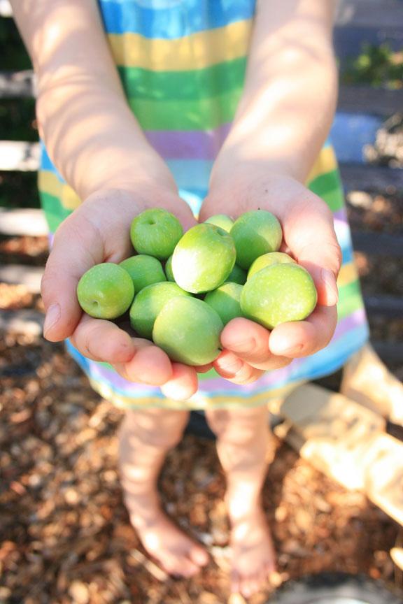 Olivesinhand