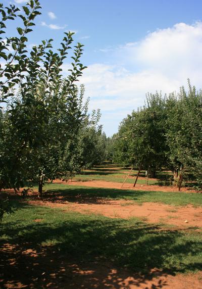 Applehill2