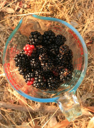 Blackberry_scones_2