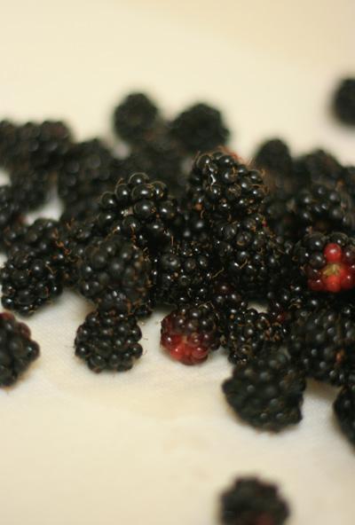 Blackberry_scones_3