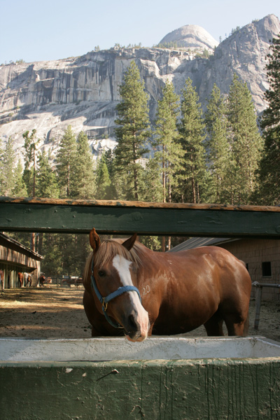 Yosemite_stables_5