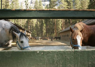 Yosemite_stables_7