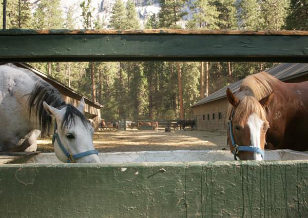 Yosemite_stables_7