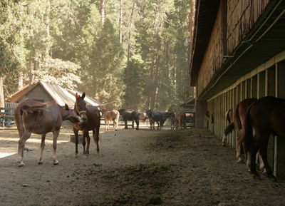 Yosemite_stables_6