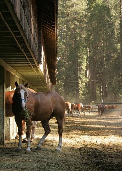 Yosemite_stables_3