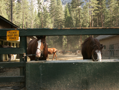 Yosemite_stables_4
