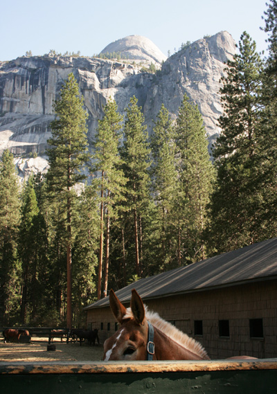 Yosemite_stables_8