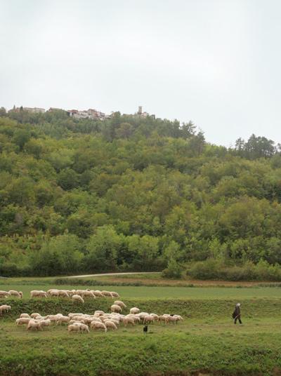 Truffle_hunting_croatia_15