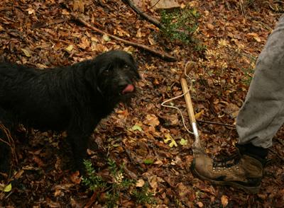 Truffle_hunting_croatia_11
