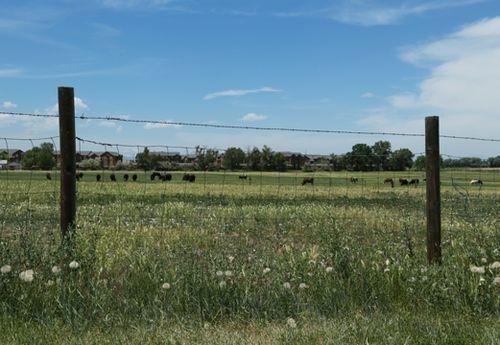 Keystone_sm_landscape_pasture_7