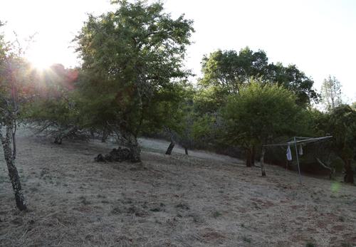 Dry_creek_valley_22
