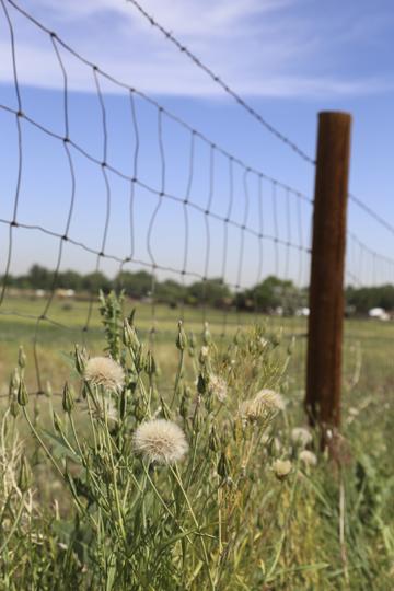 Keystone_sm_landscape_pasture_1