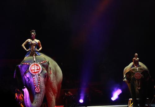 Circus_26