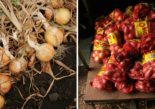 Farm_to_table_clare_barboza_4