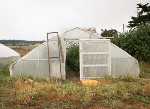Farm_to_table_clare_barboza_7