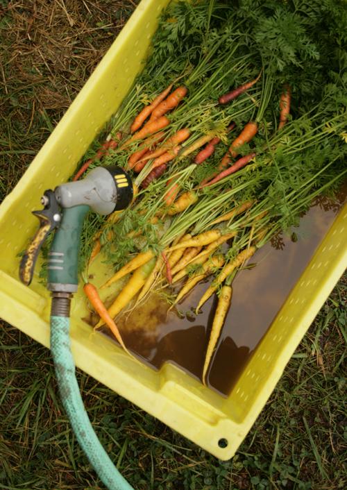 Farm_to_table_clare_barboza_31