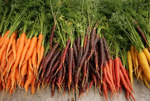 Farm_to_table_clare_barboza_27