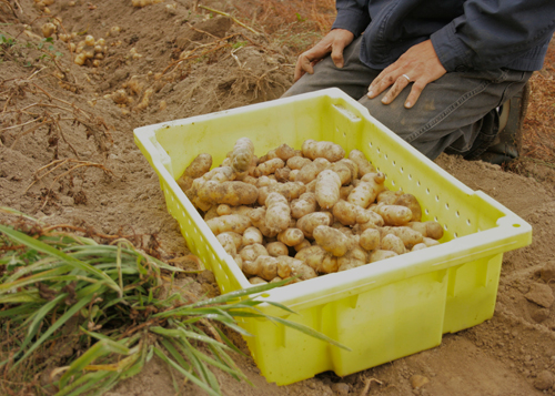 Farm_to_table_clare_barboza_28