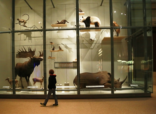 Museum_natural_history_2