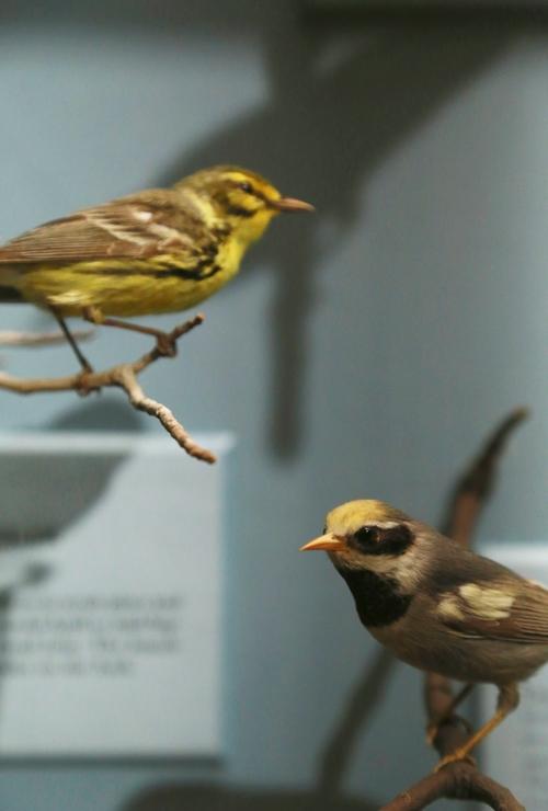 Smithsonian_16
