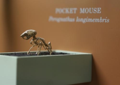 Smithsonian_9