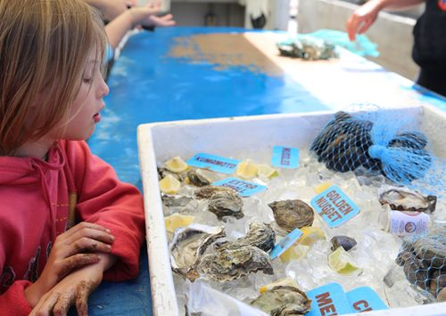 Tomales_bay_oyster_company_5