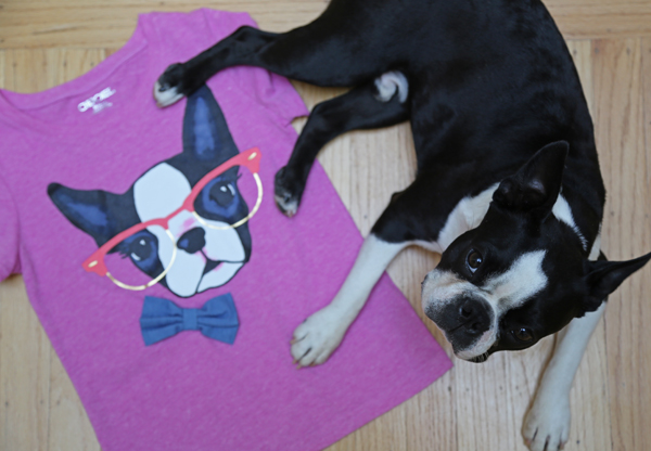 Boston_terrier_birthday_5