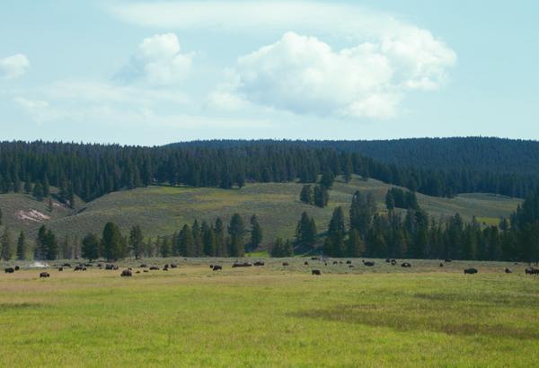 Yellowstone_17.5
