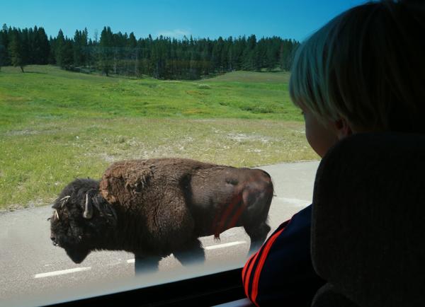 Yellowstone_19