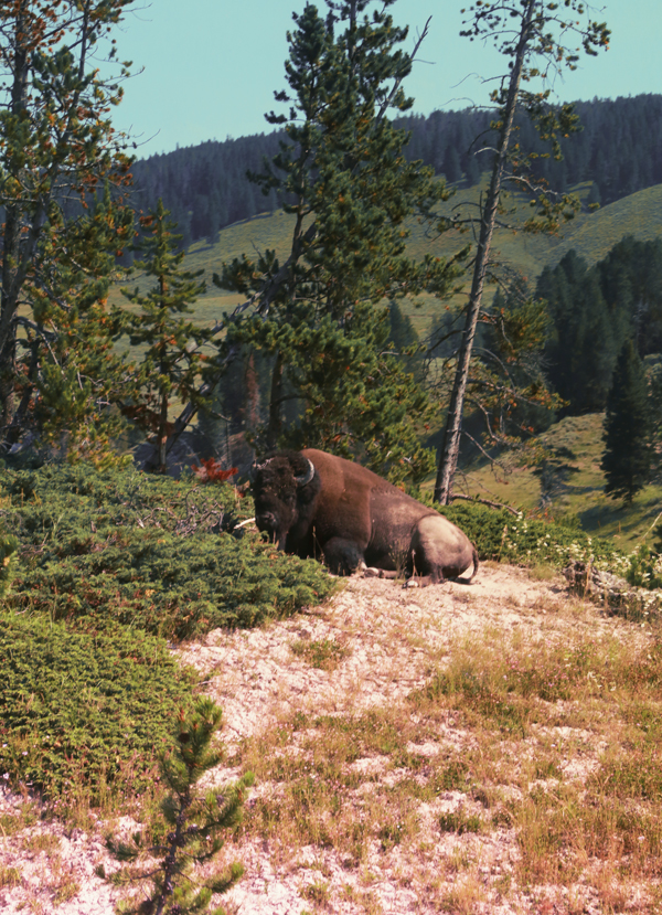 Yellowstone_20
