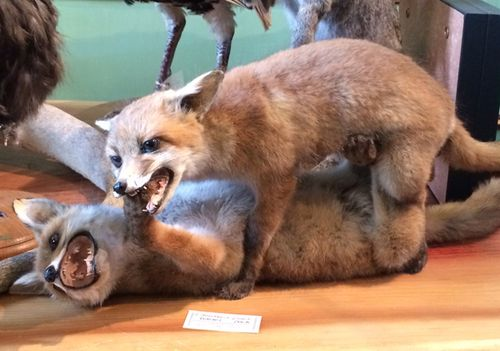 Taxidermy2