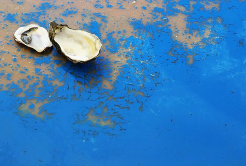 Tomales_bay_oyster_company_7