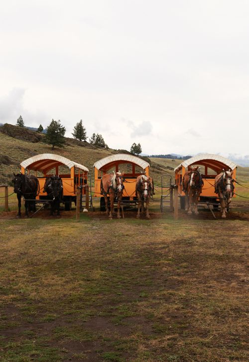 Roosevelt_lodge_cookout_yellowstone_18
