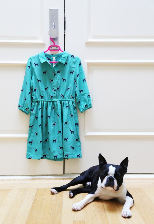 Boston_terrier_birthday_3