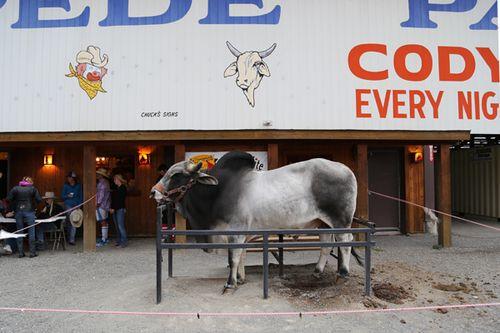 Cody_rodeo_cattle_company_chuckwagon_dinner_13
