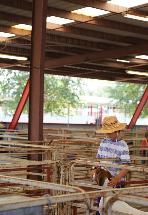Wyoming_state_fair_4