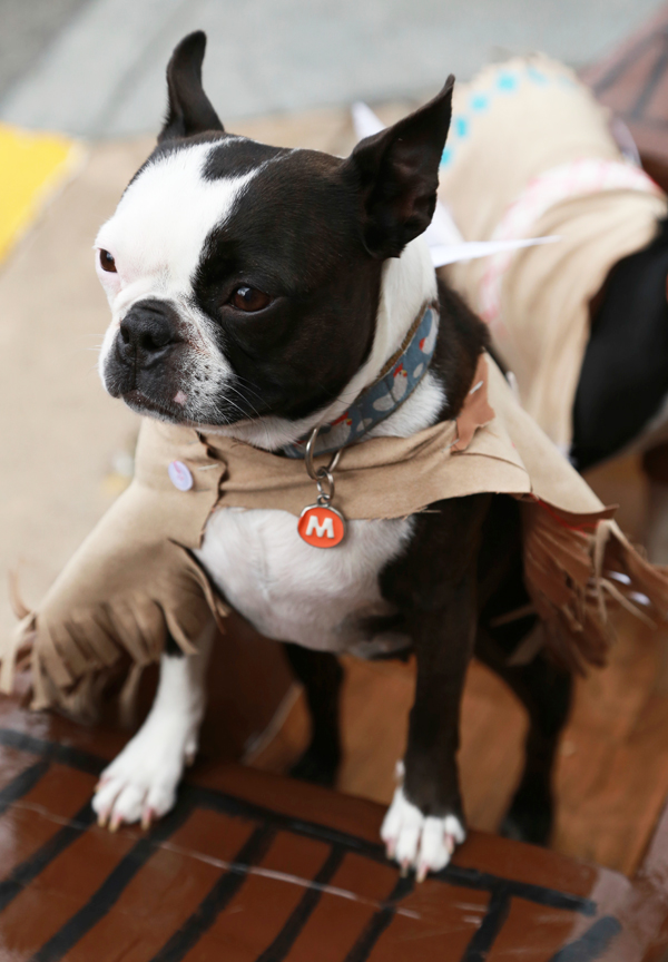 Boston_terrier_party_5