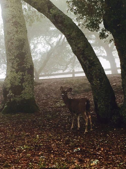 Dirttime_deer