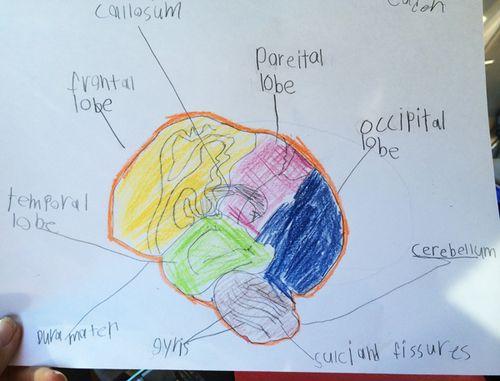 Homeschool_science_3