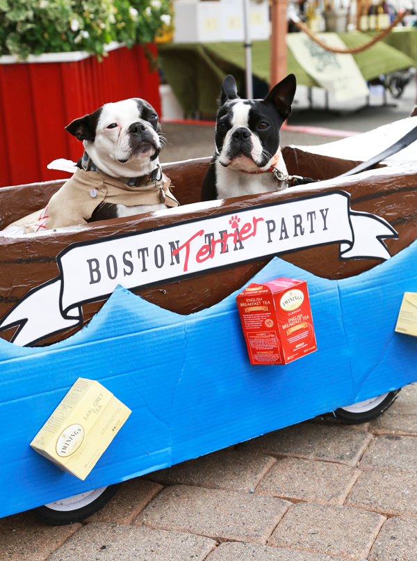 Boston_terrier_party_0