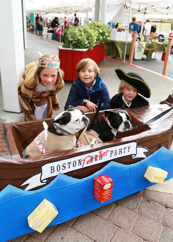 Boston_terrier_party_2