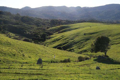 Bolinas_ridge_trailhead_9